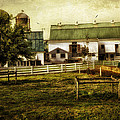 Farmland In Intercourse - Pennsylvania by Madeline Ellis