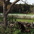 Farmland by Margie Avellino