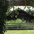 Farmyard Frame by Theresa Willingham