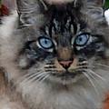 Fat Cats Of Ballard 9 by Carol  Eliassen