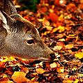 Fawn In Autumn by Simon Bratt Photography LRPS