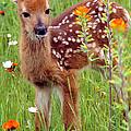 Fawn In Flowers by Larry Allan