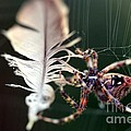 Feather And Spider by Yumi Johnson