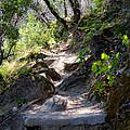 Feather Falls Stairway by Karen  W Meyer