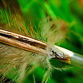 Feather by John Blanchard