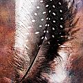 Feather by Mauro Celotti
