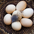 Feathered Eggs by Jean Noren