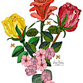 February 2012 Roses And Blooms by Anne Norskog