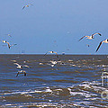 Feed Us - Ferry To Galveston Tx by Susanne Van Hulst