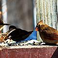 Feeding Frenzy by Edward Peterson