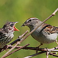 Feeding Time by Bruce J Robinson