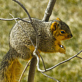 Feeding Tree Squirrel by LeeAnn McLaneGoetz McLaneGoetzStudioLLCcom