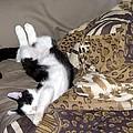 Felis Catus by Barkley Simpson