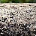 Fell By The Mighty Bark Beetle by LeeAnn McLaneGoetz McLaneGoetzStudioLLCcom