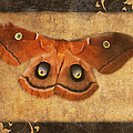Female Moth by Andee Design