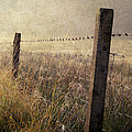 Fence And Field. Trossachs National Park. Scotland by Jenny Rainbow