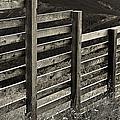 Fence Close Up by Madeline Ellis