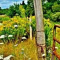 Fence Line by Sara Edens