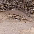 Fence Lizard by Daniel Milligan