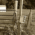 Fence Post by Jennifer Ancker
