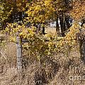 Fence Post by Lori Tordsen