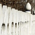 Fence by Yumi Johnson