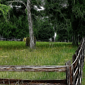 Fenced In Field by Ericamaxine Price