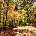 Fenced Path Through Autumn Forest - Blacksmith Fork Canyon - Utah by Gary Whitton