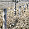 Fenceline And Cropland In Late Fall by Darwin Wiggett