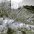 Fences In Duotone by Anne Ferguson