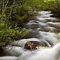 Fern Creek Horizontal by Amanda Kiplinger