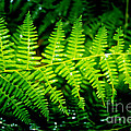 Fern II by Ellen Heaverlo