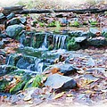 Fern Spring In Autumn by Heidi Smith