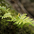Ferns In Forest by Perry Van Munster