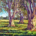 Ficus Trees by Mark Hartung