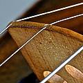 Fiddle Strings by Bill Owen