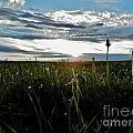 Field Of Alfalfa 5 by Tayla Hanson