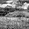 Field Of Cattails II by David Patterson