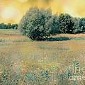 Field Of Dreams by Sophie Vigneault