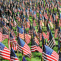 Field Of Flags by Mary Anne Williams