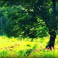 Field Of Flowers by Vickie Beasley
