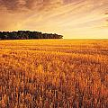 Field Of Grain Stubble Near St by Dave Reede