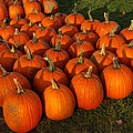 Field Of Pumpkins by LeeAnn McLaneGoetz McLaneGoetzStudioLLCcom