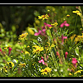 Field Of Wildflowers by Carolyn Marshall