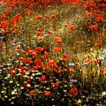 Field Of Wildflowers by Ellen Heaverlo