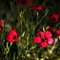 Field Of Wildflowers  by Saija  Lehtonen