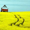 Field Of Yellow by Aisha Karen Khan