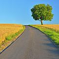 Field Path With Walnut Tree by Raimund Linke