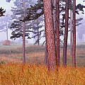 Field Pines And Fog In Shannon County Missouri by Greg Matchick