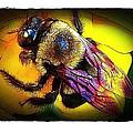 Fierce Bumblebee by Judi Bagwell